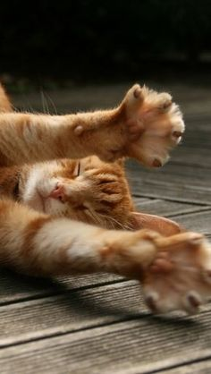 """If stretching were wealth, the cat would be rich."" --African Proverb"