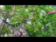 walking in the forrest.,#asiyaya #golf #workout #weather #walking #landscape #recreation #positivevibes #explore #adventure #nature #naturelovers #norway #motivation #inspiration #wanderlust #homesick #bestoftheday #outdoor #photography #traveling #shortfilm #oldmanwalking #norwayinframes #sunset #lake #ducks #larvik