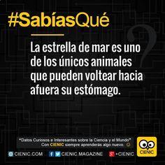 ✓ Conoce Karaoke Maria Sabias Que, Zac Efron Datos Curiosos y Datos Curiosos De Animales  ➡ http://www.cienic.com/ingenio-en-la-calle/