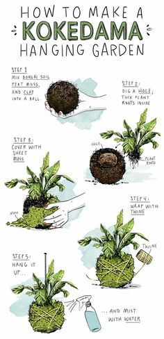 How to Make Kokedama Hanging Gardens Perfect for Small Spaces is part of String garden - Because every tiny apartment could use a levitating garden String Garden, Planting Bulbs, Planting Flowers, Flower Gardening, Hanging Plants, Hanging Gardens, Diy Hanging, Hanging Succulents, Bonsai Soil
