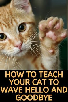 Want to teach your cat how to wave? Discover 6 simple steps to train your cat to. - Want to teach your cat how to wave? Discover 6 simple steps to train your cat to wave to you whenev - I Love Cats, Crazy Cats, Cool Cats, Cat Care Tips, Pet Care, Training A Kitten, Cat Hacks, Kitten Care, Cat Behavior