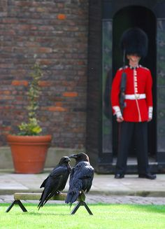 Tower of London~The crown jewels are worth a large fortune, but the six ravens residing at the castle are worth an entire nation. Legend has it that if the ravens were to leave, the British kingdom would collapse.