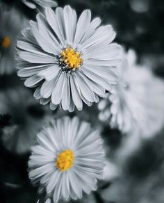 (8) Tumblr Welcome Spring, Spring Has Sprung, Tumblr, Plants, Photography, Color, Art, Art Background, Photograph