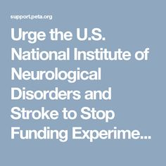 Urge the U.S. National Institute of Neurological Disorders and Stroke to Stop Funding Experiments on Dogs | PETA