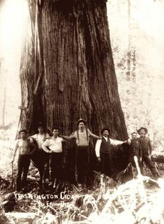 vintage logging photo- back when hats were required, mustaches were optional