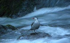 Nuestros bellos ríos y su fauna
