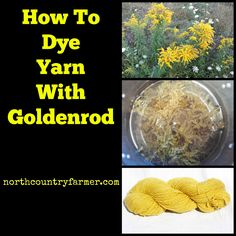 How To Dye Yarn With Goldenrod Flowers