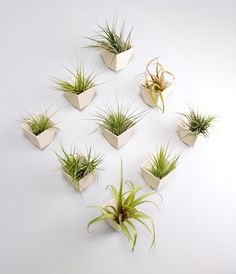 Hive planter set of 9 by lightandladder on Etsy, $324.00