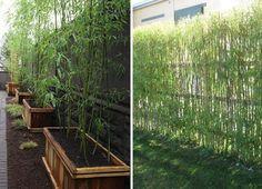 Ideas para crear divisiones verdes en tu jardín -pared de bambú