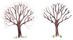 Eclaircie de la ramure (arbre fruitier) Potager Bio, Agriculture, Nature, Plants, Multiplication, Garden Ideas, Camping, Gardening, Crochet