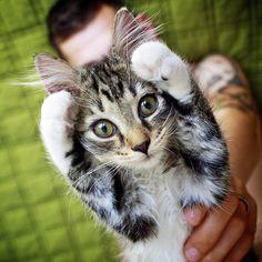 Cat-Cat-Cat paws up!!!!!