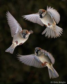 Aerial Ballet / Ballet Aérien❤️