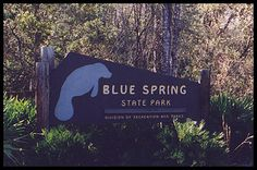 Blue Springs State Park-Awesome place to see 30+ manatees at one time