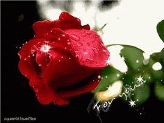Imagen romántica de rosas rojas de amor con movimiento y brillo For You