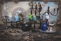 A wonderful collection of Taxidermy Birds by Kim Zoe Wagner available in our store £150 each
