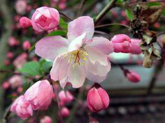 밀양 남천강의 꽃