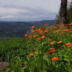 Kom tidlig i gang med Ringblomst - Røysheim Urteverksted Om, Mountains, Nature, Travel, Voyage, Viajes, Traveling, The Great Outdoors, Trips