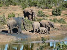 Elephants in Sydney Australia