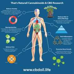 Research from around the world is showing the immense potential uses for cannabinoids like CBD. From anxiety, pain relief, inflammation, atherosclerosis, bone growth and more - cannabinoids from non-psychoactive hemp can be of a huge benefit to human hea Essential Oils For Depression, Human Body Anatomy, Anatomy Organs, Endocannabinoid System, Cbd Hemp Oil, Cannabis Growing, Medical Cannabis, Cannabis News, Cannabis Oil