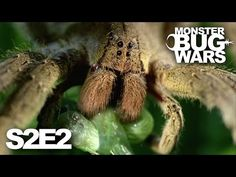 Monster Bug Wars | Upiorne Robale #S2E2 – Blood on the Forest - YouTube