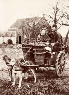 vintage everyday: 25 Interesting Vintage Pictures of Dog Carts and Milk Women in Belgium from the Late and Early Centuries Antique Photos, Vintage Pictures, Vintage Photographs, Old Pictures, Vintage Images, Amazing Pictures, Dog Bike Basket, Biking With Dog, Social Stories