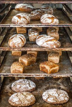 Jak připravit výborný domácí kváskový chléb - Vegan.cz Muffin, Bread, Vegan, Breakfast, Food, Gardening, Morning Coffee, Brot, Essen