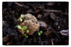 How To Make A Seed Bomb For Guerilla Gardening... - http://www.ecosnippets.com/gardening/how-to-make-a-seed-bomb/