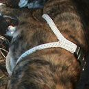 DIY Crochet Dog Harness