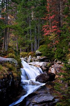 Stream in High Tatras, Slovakia Austria, Travel Around The World, Around The Worlds, High Tatras, Bratislava Slovakia, Continental Europe, Central Europe, Go Outside, Oh The Places You'll Go