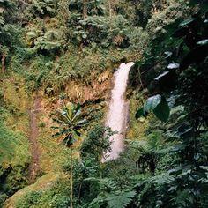 Nyungwe Forest National Park | Rwanda | Expert Africa