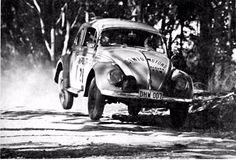 1964 rally bug
