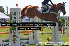 Welcome to Equestrian Confessions. Equine Quotes, Equestrian Quotes, Equestrian Problems, Funny Horse Memes, Funny Horses, Horse Girl Problems, Inspirational Horse Quotes, Horse Riding Quotes, Horse Pictures