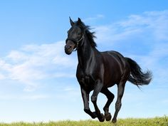 I wish I had this horse to travel from place to place and to see my beloved friends Romeo and Benvolio.