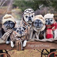"2,214 Likes, 35 Comments - Pug Life Magazine® (@puglifemagazine) on Instagram: ""OMG !!! We love you @lovepugsandkisses ❤️PUGS❤️ Subscribe, share, swoon, smile, & shop 