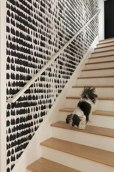 Graphic black and white wallaper adds chic beauty to the interior 16 Fabulous Ideas that Bring Wallpaper to the Stairway