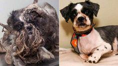 Perros-despues-rescatados1