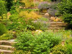 This pathway softly winds up to the house thanks to lush plantings spilling and cascading over the boulder staircase. Tip: No matter the scope of the project, always maximize the space by embellishing its existing character, like grade changes.