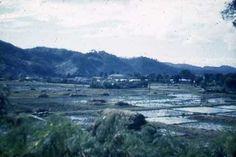 Rice Paddies behind Nago