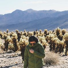 Blending in with the Cholla Cactuses in Joshua Tree National Park.  (Also I looked up the plural for cactus and cactuses is totally in the dictionary) #travel #adventure #roadtrip #california : @mac_hugh