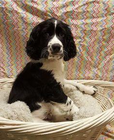 Tex #Puppies #Adopt #AllPetsClub #Furbaby