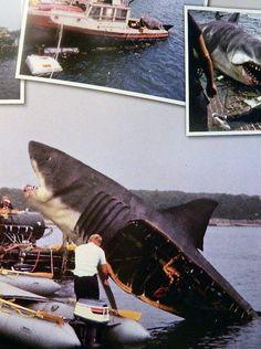 Jaws Animatronic Set Photos