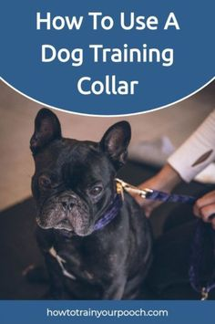"""If you're wondering how to use a training collar for dogs, your dog is likely exhibiting undesirable behavior such as incessant barking or running off. Using a shock collar is a contentious issue that divides dog lovers into two camps: the """"for"""" camp and the """"against"""" camp. In our opinion, shock collars can help correct your dog's behavior efficiently; you just need to know how to use it properly and when it's appropriate. #shockcollar #dogtraining #trainingcollar Best Dog Training, Training Tips, Bark Collars For Dogs, Anti Bark Collar, Dog Shock Collar, Buy A Dog, Aggressive Dog, Training Collar, Dog Barking"""