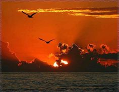 Birds at sunset Shadow Silhouette, Bird Silhouette, Amazing Sunsets, Amazing Nature, Beautiful Sunset, Beautiful World, Beautiful Places, Beautiful Scenery, Cool Photos