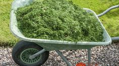 Mulching With Grass Clippings: Can I Use Grass Clippings As Mulch In My Garden - Can I use grass clippings as mulch in my garden? Mulching with grass clippings, either on the lawn or in the garden bed, is a time honored method which enhances so Garden Mulch, Garden Compost, Garden Beds, Garden Landscaping, Garden Grass, Organic Fertilizer, Organic Gardening, Gardening Tips, Gardening Books