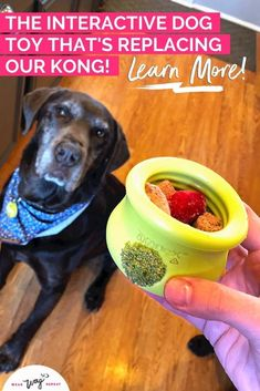 If you're familiar with the Kong, then you know how much dogs love to eat tasty treats out of a rubbery enrichment toy. There are a lot of stuffable dog toys available beyond the Kong! You can use these to mix up your enrichment routine with your dog or keep them busy indoors when you can't fit in a long walk.The West Paw Toppl is a stuffable dog toy with a wide opening that's perfect for filling with your dog's food, treats and natural chews. Black Lab Mix, Brain Games For Dogs, Chocolate Labs, Interactive Dog Toys, Labrador Retrievers, Find Pets, Mom Blogs, Dog Friends, Dog Mom