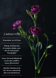 Flower Glossary: Carnation - Design*Sponge