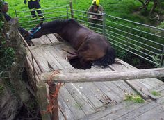 A mare that had fallen through an old wooden bridge over the River Rother was lifted to safety by specialist firefighters last week.