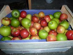 Caisse de pommes bio panachées mas daussant ruche qui dit oui! codognan