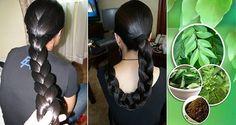 Estas hojas no solo hacen crecer su cabello, también evitan que tu pelo se caiga y lo reparan!!