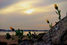 No meio de pedra nasce estas lindas flores